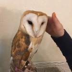 New friend at the owl cafe.