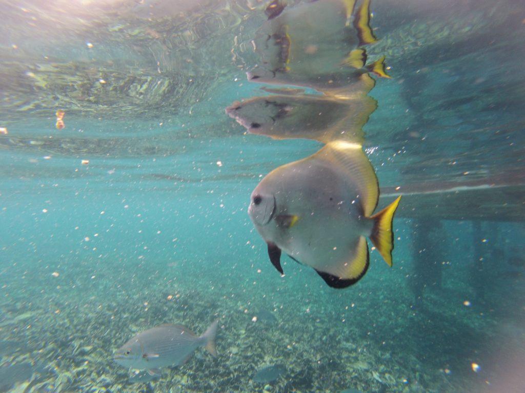Fish Raja Ampat
