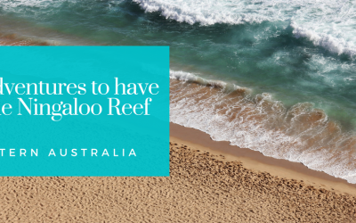 3 Adventures to have at the Ningaloo Reef, Western Australia