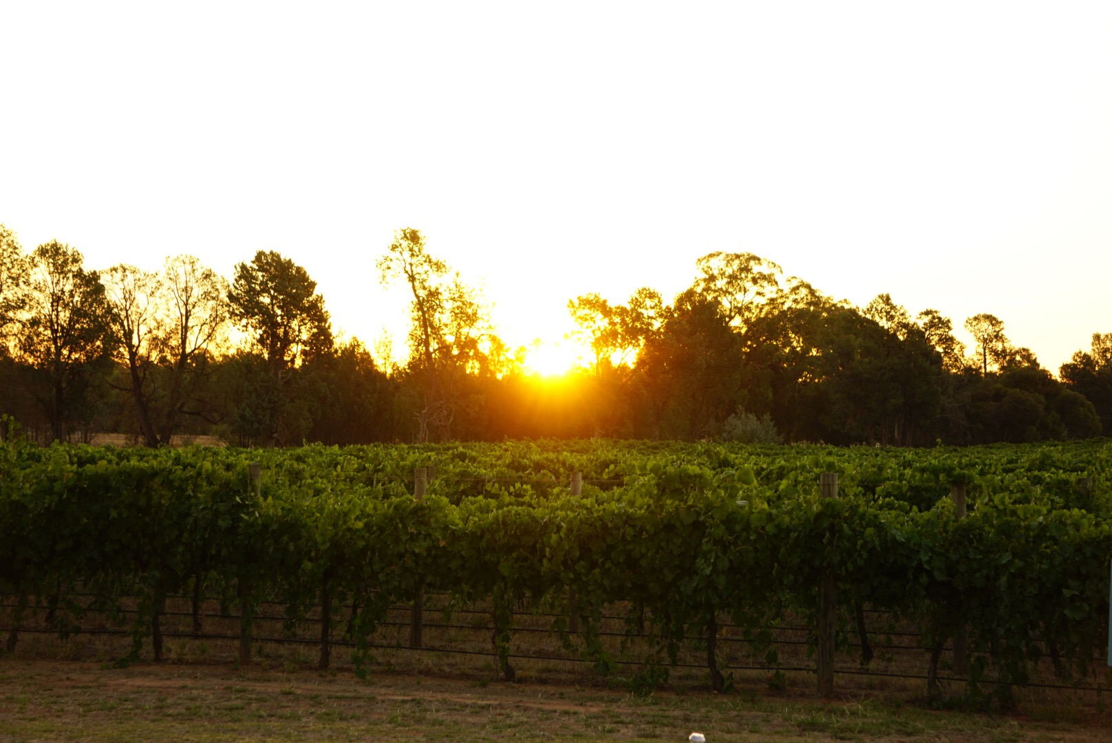 Winery sunset