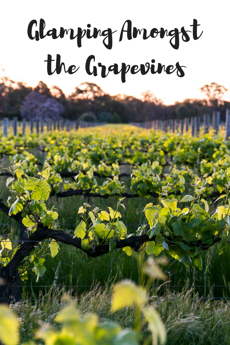 Glamping Amongst the Grapevines is one of the most amazing glamping experiences in all of Australia