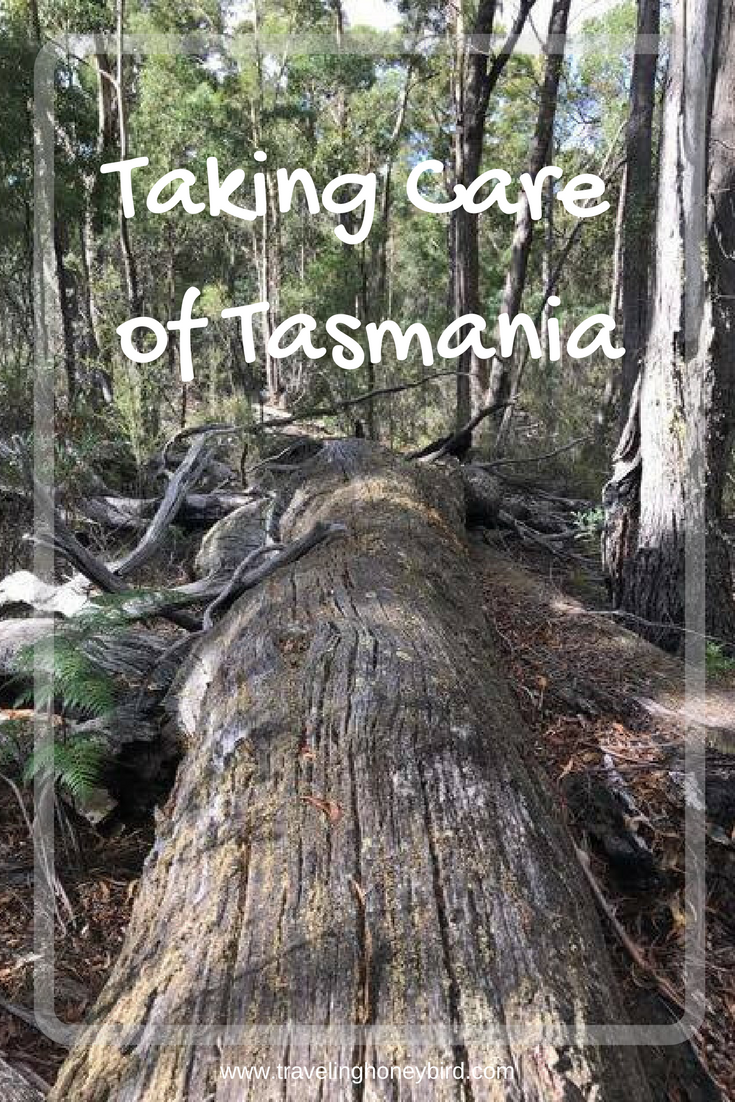 Taking Care of Tasmania