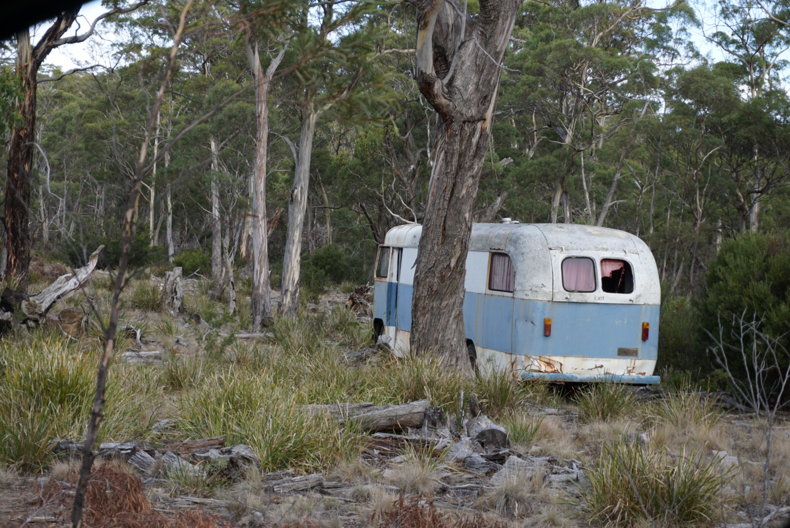 A Rare Wild Bus: Taking Care of Tasmania || Traveling Honeybird