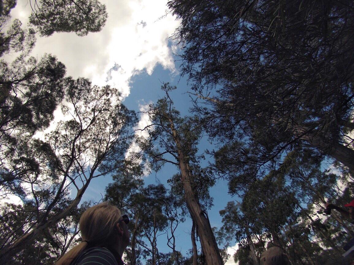 Taking Care of Tasmania    Traveling Honeybird