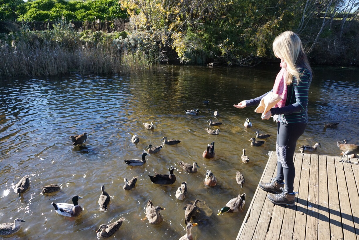 Feeding the ducks - Tiny Taste of Tasmania || Traveling Honeybird