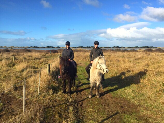 Icelandic Horses in New Zealand