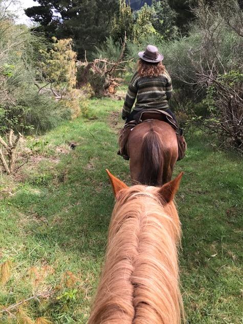 Horse riding Pucon