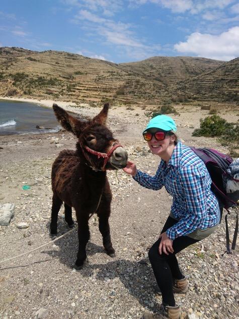 Donkey in Bolivia