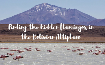 Finding the hidden flamingos in the Bolivian Altiplano