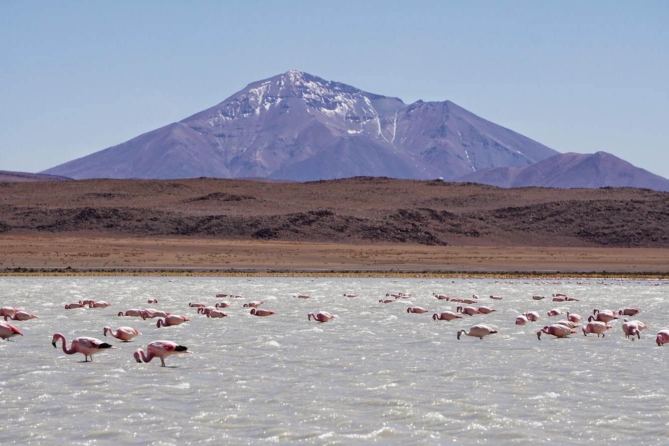 Bolivia flamingos in the mountains