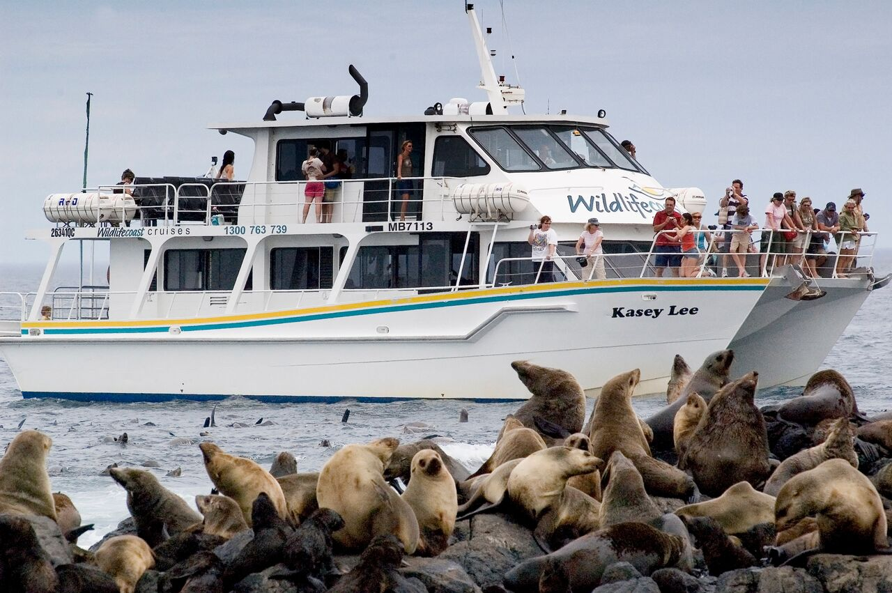 Wildlife Coast Cruises - seals