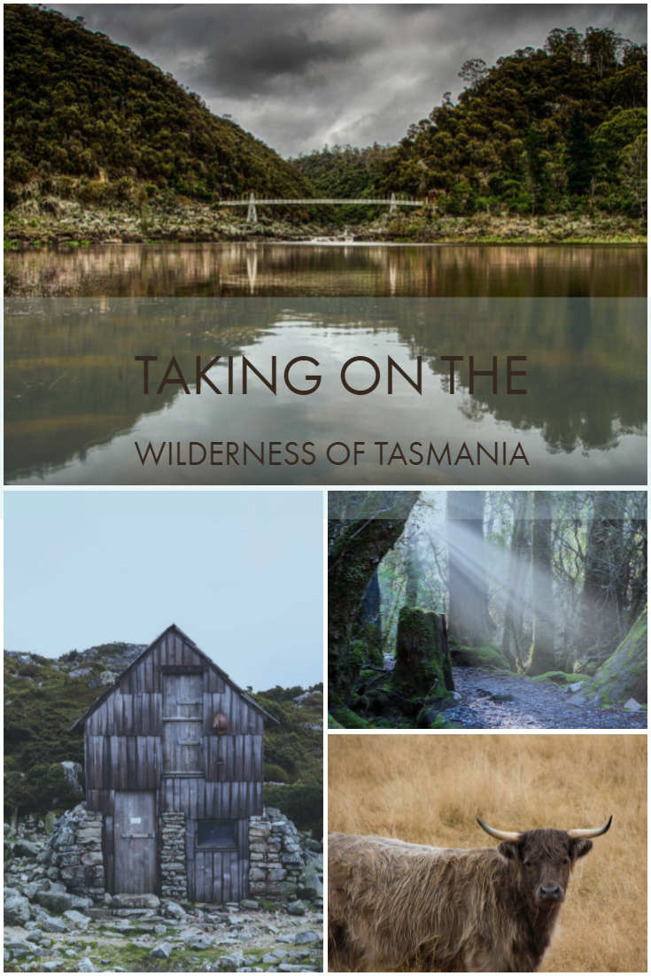 Tasmania is one of Australia's most magical places to visit. It's no wonder with rolling hills, ancient forests and an abundance of delightful creatures.