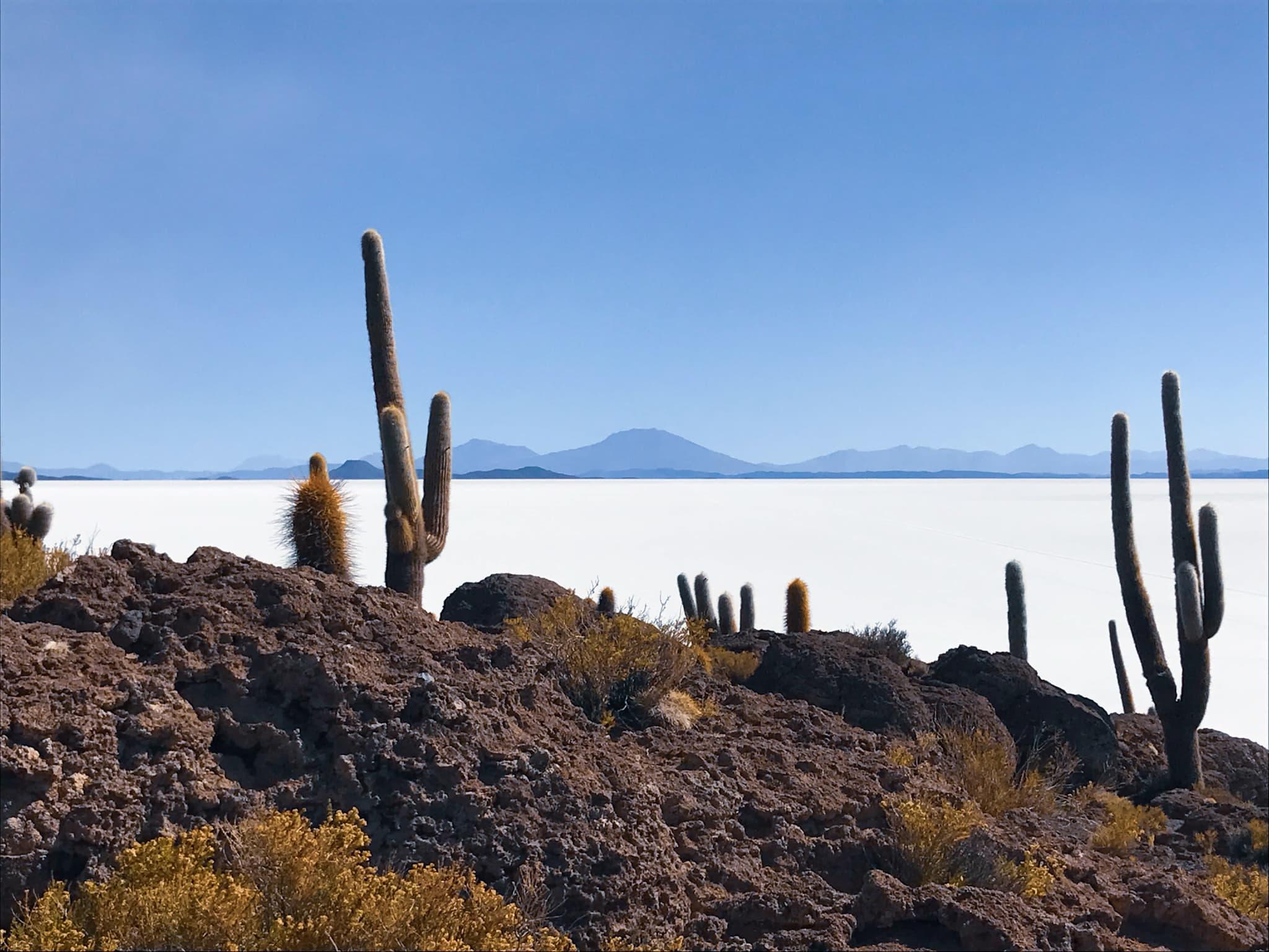 Cactus Island Bolivia Traveling Honeybird