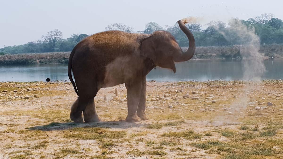 Baby elephant at Barahi Jungle Lodge
