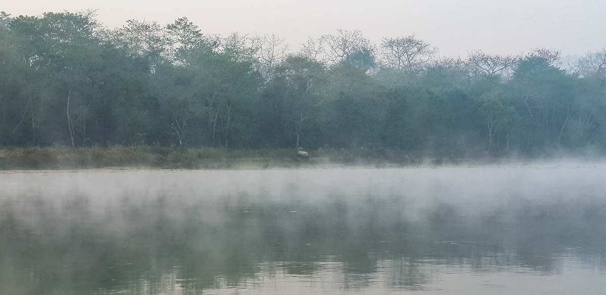Rhino in the mist at Chitwan National Park