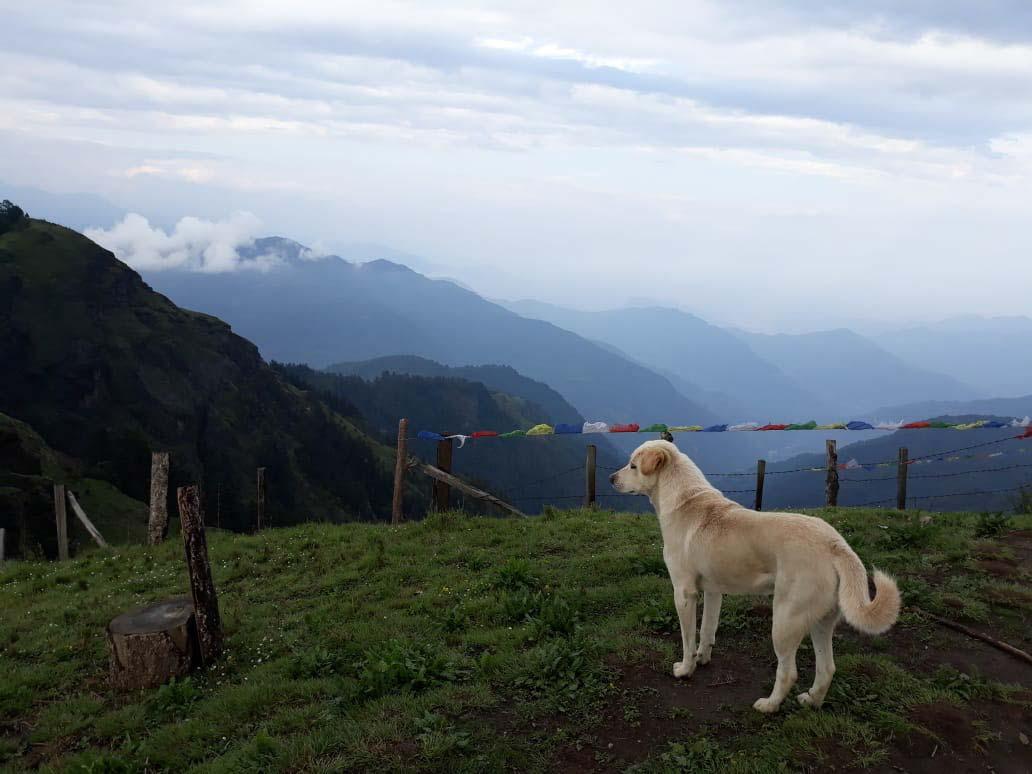 Trekking puppy on Mohare Danda
